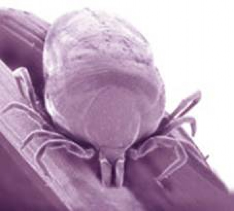 Hogyan lehet kivédeni a kullancs csípést?