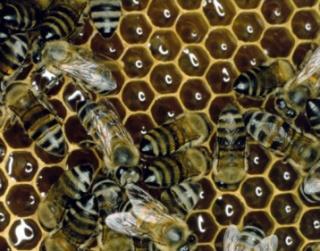 Istenek nektárja a méz