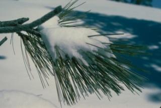 Vigyázzon, ha télen született!