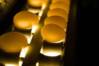 Magyarországon is találtak dioxin-gyanús tojást