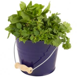 Nyugtató, altató, feszültségoldó növények