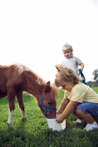 Vendég ló a vendéglőben