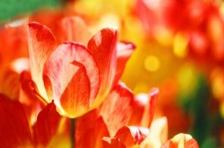 Napvirágot a félelemre, gesztenyét a közömbösségre szedj