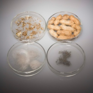 Hogyan zajlik az immunterápiás kezelés?