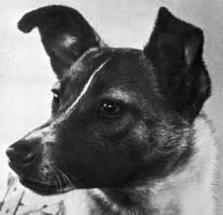 Lajka kutya borzalmas halálának igaz története
