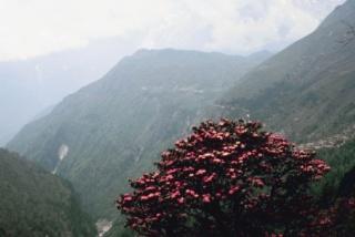 A fiatalság titka a Himalájából már nálunk is kapható