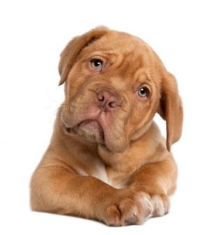 Kutyáink pontosan tudják, mit gondolunk