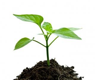 Kertészkedés – zölden