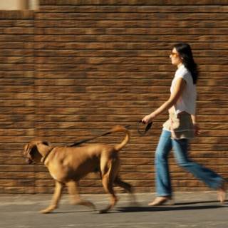 Kutya és gazdija futónap
