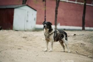 Iszonyatos állapotban lévő, éhező kutyákat találtak a hatóságok