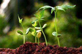 Az igazság a  növényvédőszer-maradékok egészségügyi kockázatáról