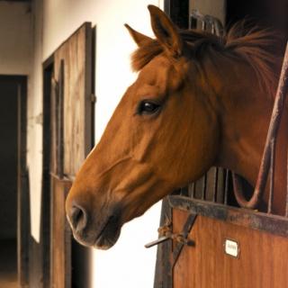 Miből vegyünk lovat?