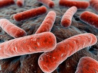 Egy felnőtt emberben több mint kétkilónyi baktérium él