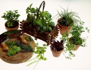Óvatosan a gyógynövényekkel!