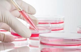 Új utak a daganatok gyógyszeres kutatásában