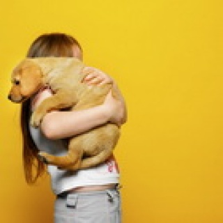 Háziállat-allergia – nem csak a szőre okozza