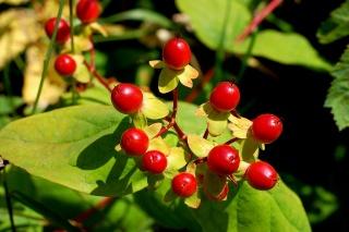 Növényekkel a gyomorrák ellen