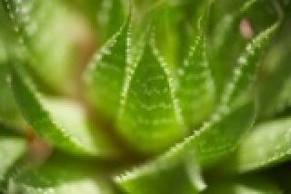 Gyógynövények, melyek kiállták az évezredek próbáját