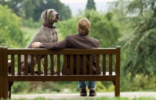 A házi kedvencek szerepe az immunerősítésben
