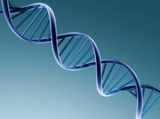 Rákra hajlamosító új génvariációk