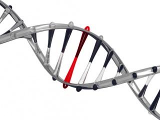 A génjeinkbe kódolt táplálkozás