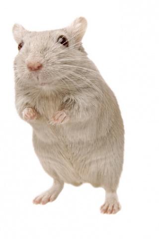 Már nem csak sci-fi: rossz emlékeket töröltek egerek agyából