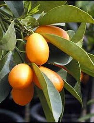Egzotikus gyümölcsök a világ minden tájáról