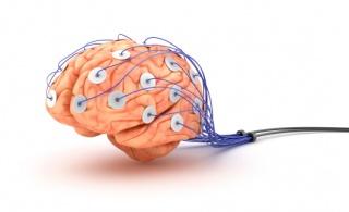 Az agy optimalizálja az edzés hatékonyságát