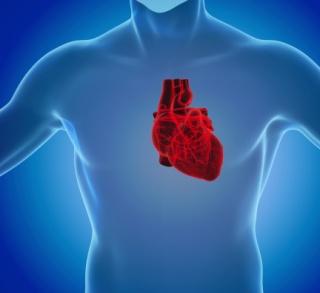 Megduplázódott a transzplantációk száma