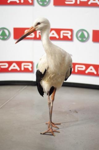 Margit, a gólya a legnépszerűbb magyar állat