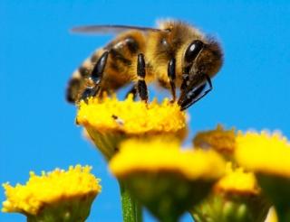 Mentsük meg a méheket – de miért?
