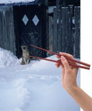 A kutyahúsfogyasztás ellen kampányolnak Kínában az állatvédők