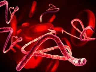 Gyorsteszt az ebola kimutatására