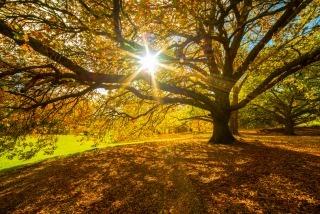 Győzze le az őszi fáradtságot!