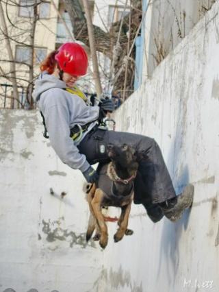 Kutyamentő mentőkutyás
