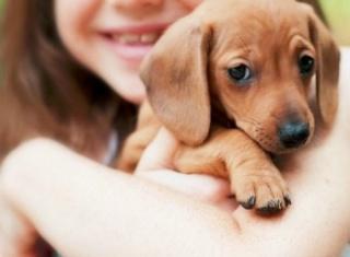 Itt a magyarázat a kutya-ember barátságra
