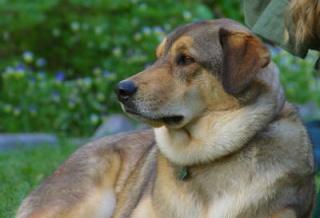 Sok ember hal bele a kutyáktól elkapott fertőzésbe