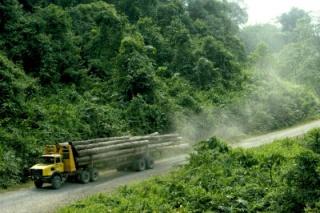 Végzetes következményei lehetnek az erdőirtásnak