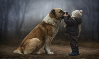 Újabb ősi titkok kutya és ember barátságáról