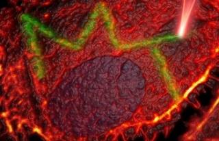 Újabb magyar áttörés a rákkutatásban
