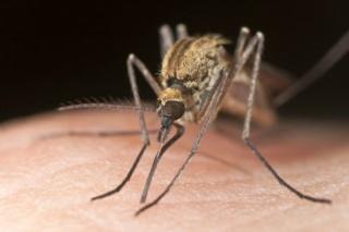 Természetes módszerek a szúnyogok ellen