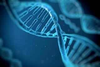 Magyar kutatók: ez lenne az örök élet titka?