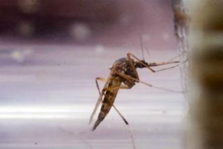 Hogyan védekezzünk a szúnyogok ellen?