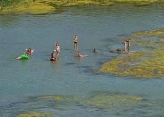 Miért lepik el az algák a Balaton felszínét?
