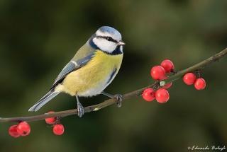 Így etessük a madarakat!