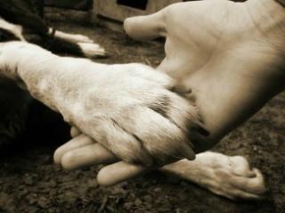 Védjük meg kutyáinkat a szívférgességtől!