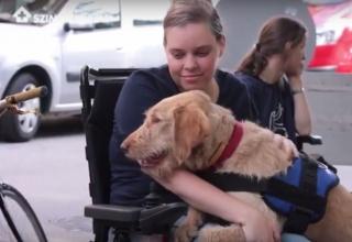 Ő a legjobb kutya: ahol tud, segít