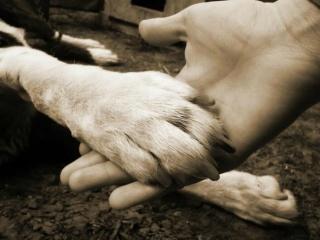 Vigyázzunk állatainkra!