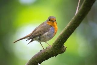 Május 10 – A madarak és fák napja