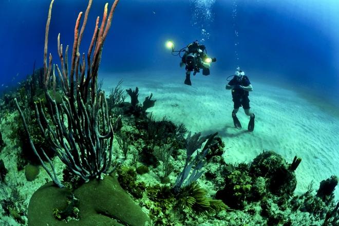 Több mint négyszeresére nőtt a holt övezetek területe az óceánokban